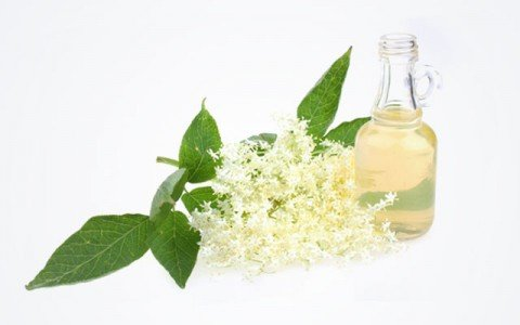 Tea Tree (Melaleuca Alternifolia) Oil